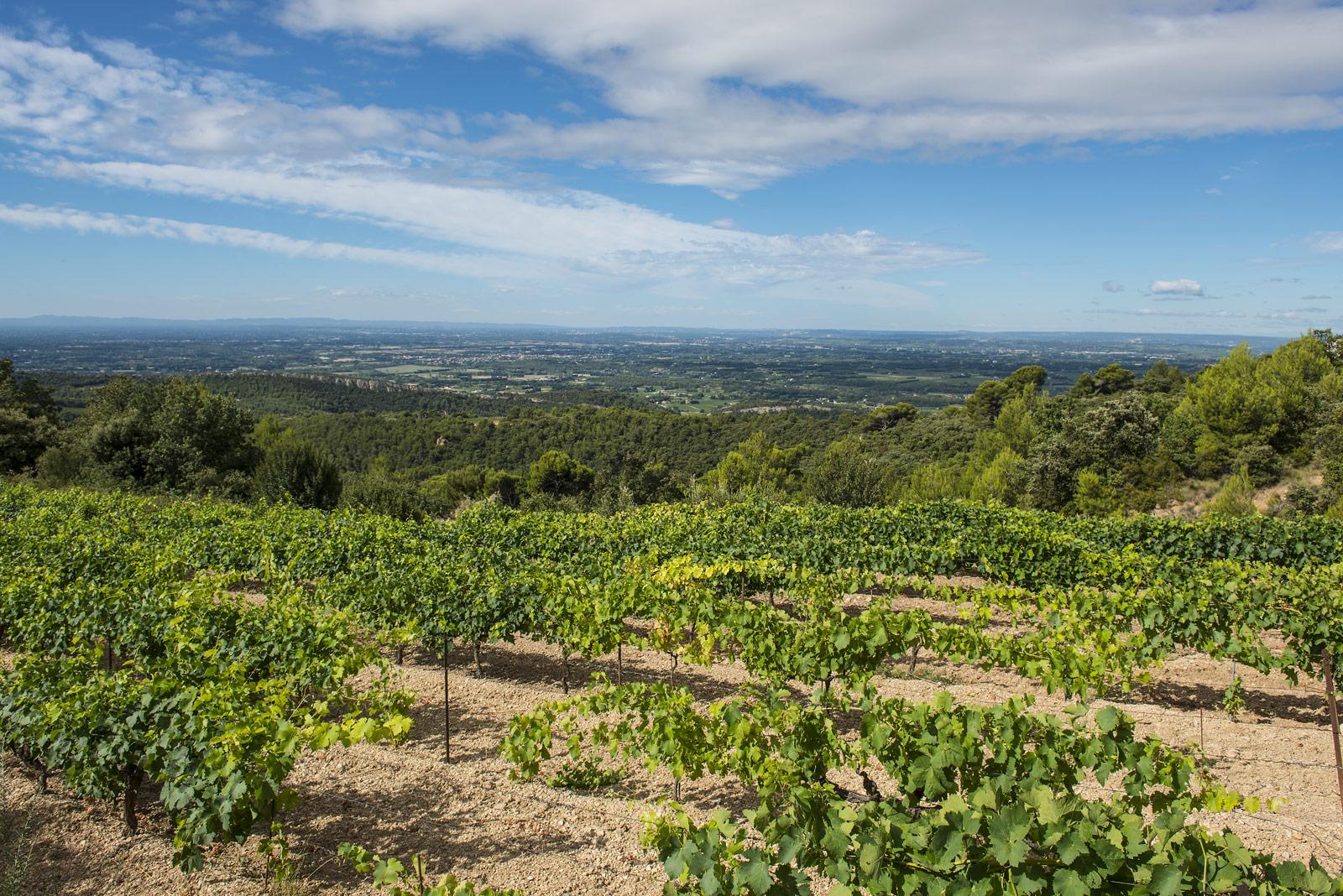 Quelques vignes à flanc de coteau, une terre caillouteuse, un ciel bleu magnifique : la quintessence de notre terroir